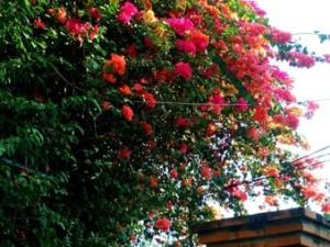 аренда дома в Нячанге, вход, фото